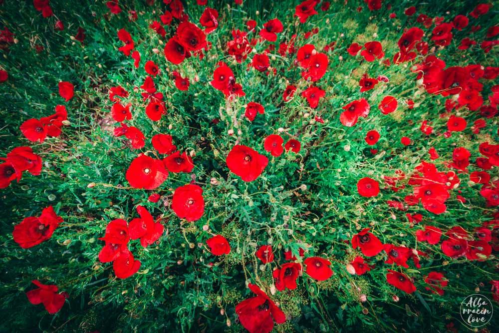 Botánica en la Sierra de Albarracín, una explosión de color y aroma.