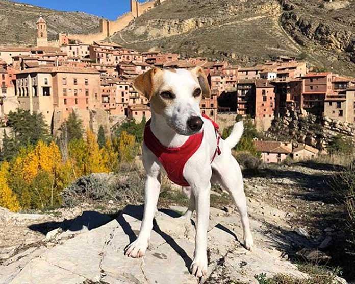 Fotografía de un perro con Albarracin al fondo