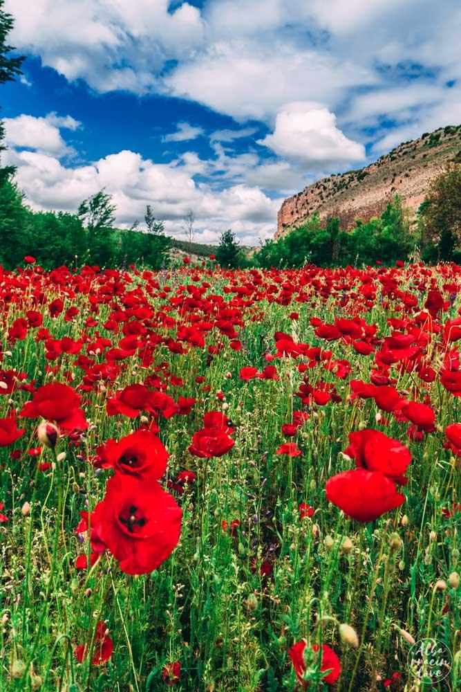 Fotografia de botánica en la Sierra de Albarracín