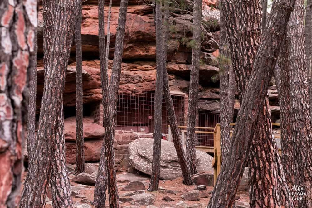 fotografia de arte rupestre en los pinares de rodeno