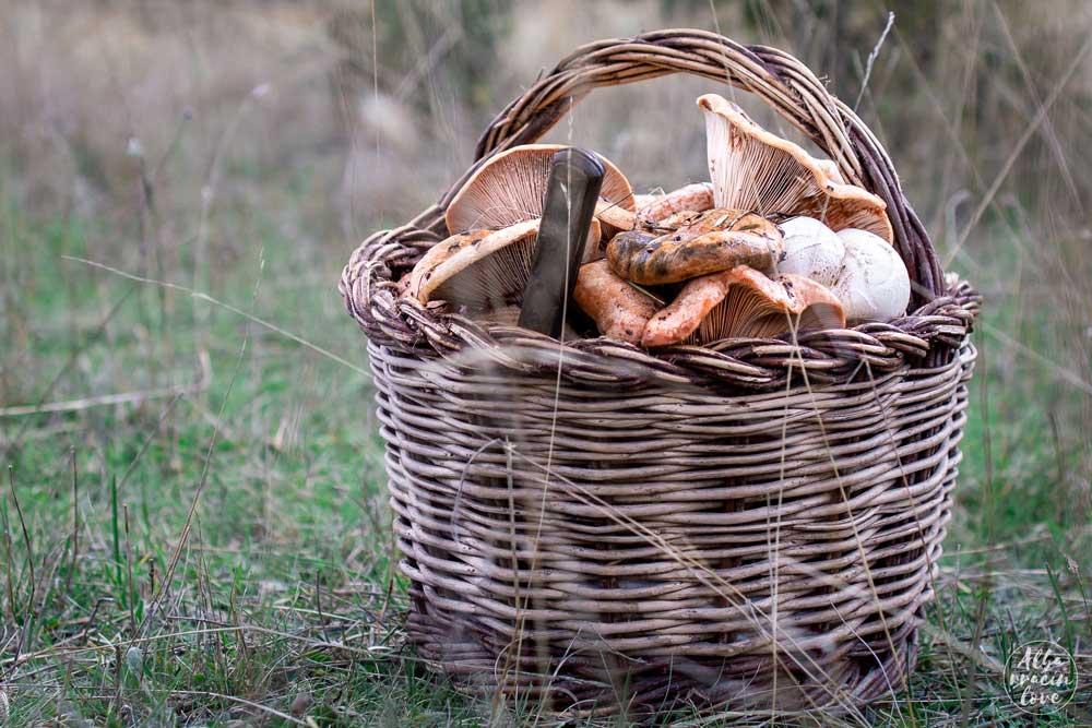 Fotografía de un cesto con setas recolectadas en el monte de Albarracin