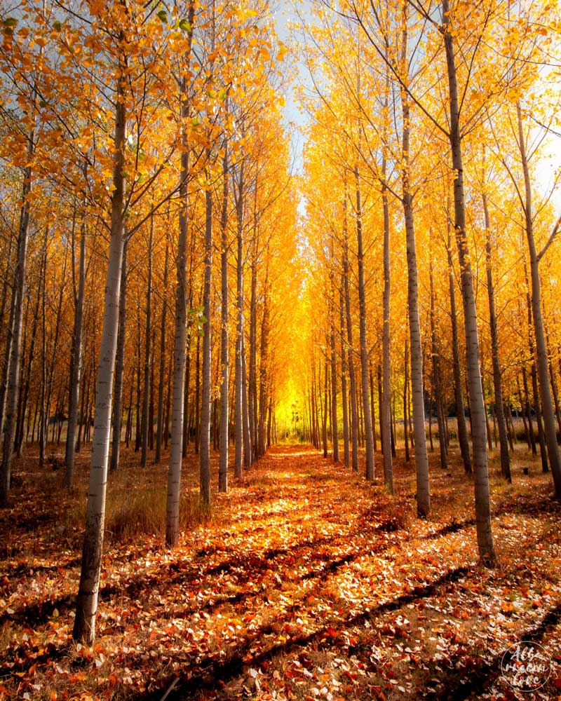 Fotografia de un paisaje de otoño en la sierra de Albarracin