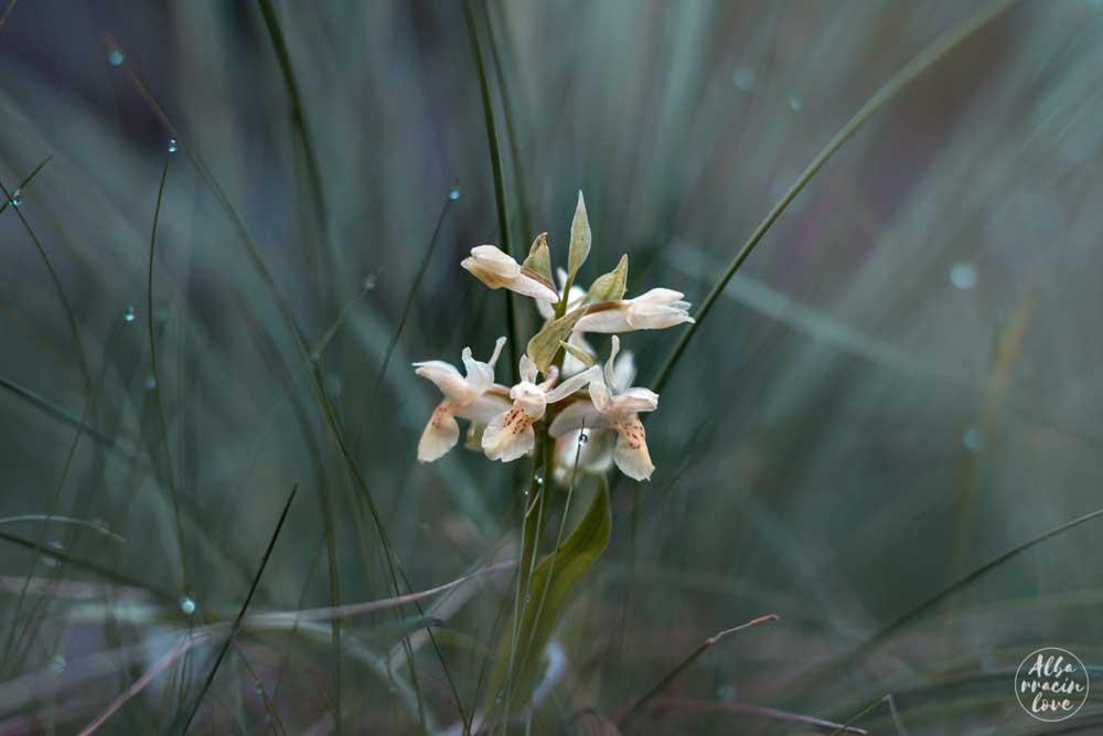 fotografía de flores silvestres