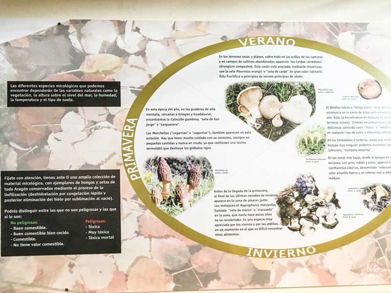 Fotografia del cartel con información de las setas de la zona
