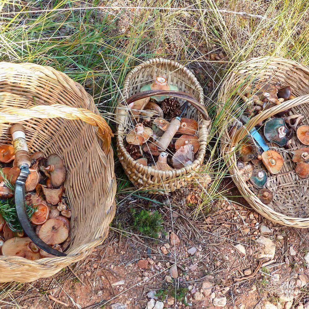 Cestos de mimbre para la recogida de setas