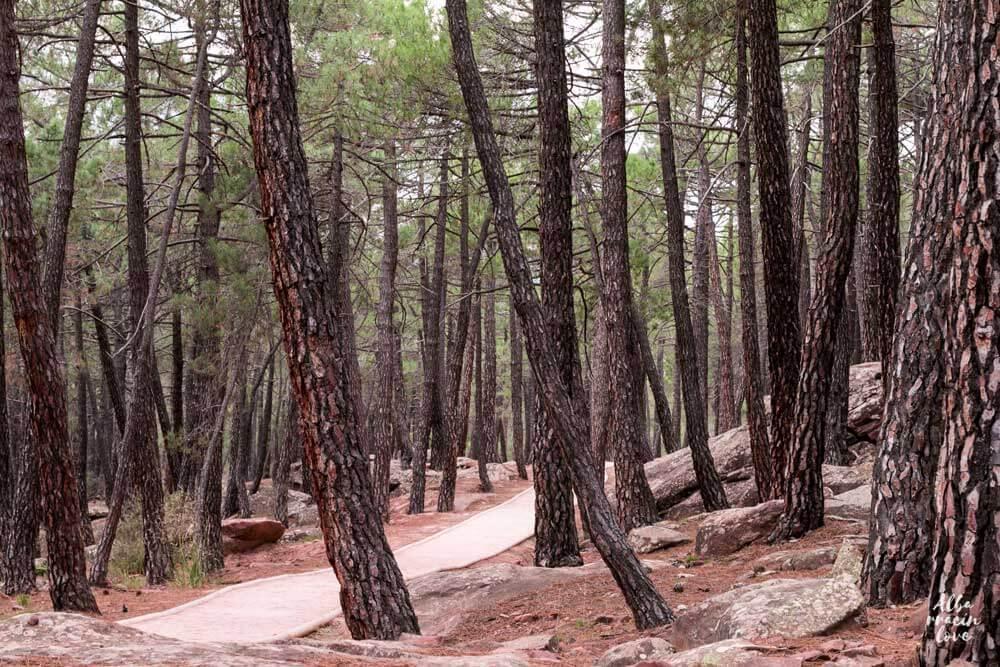 Fotografia de los Pinares de Rodeno en Albarracin