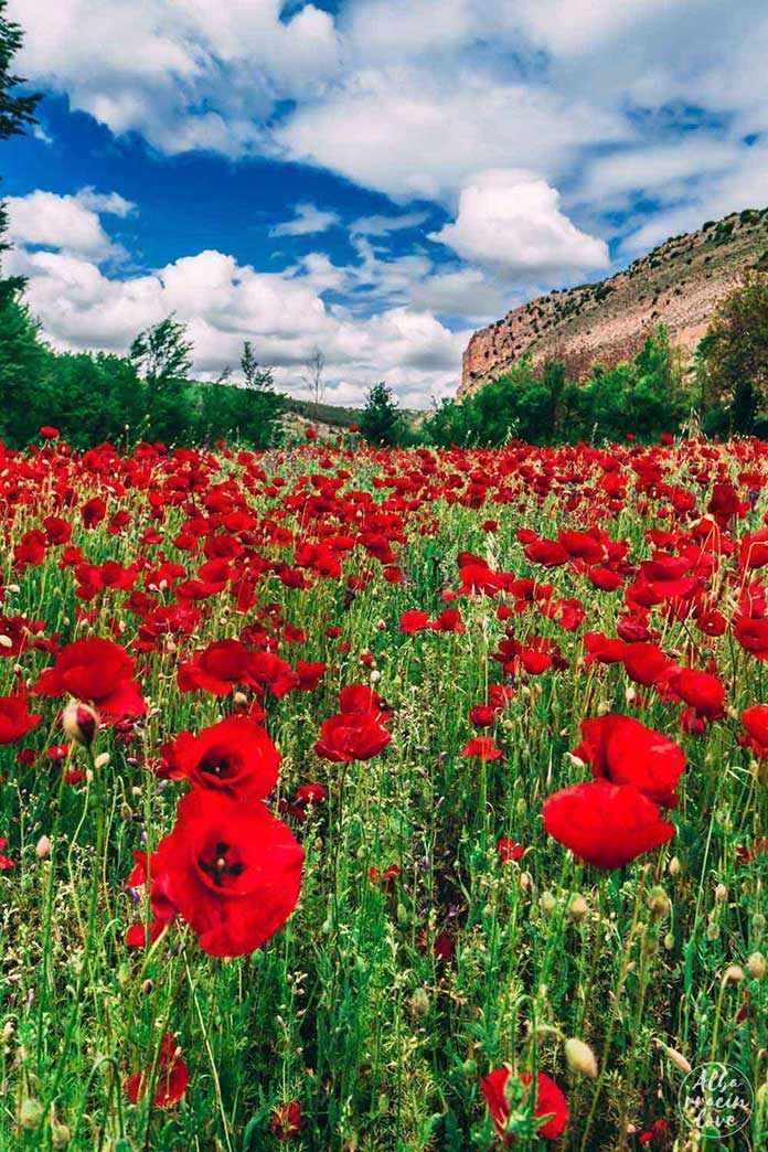 plan10-amapolas-albarracin-verano