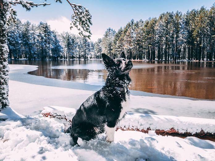 Fotografía de un perro en la Sierra de Albarracin, Teruel, Aragón