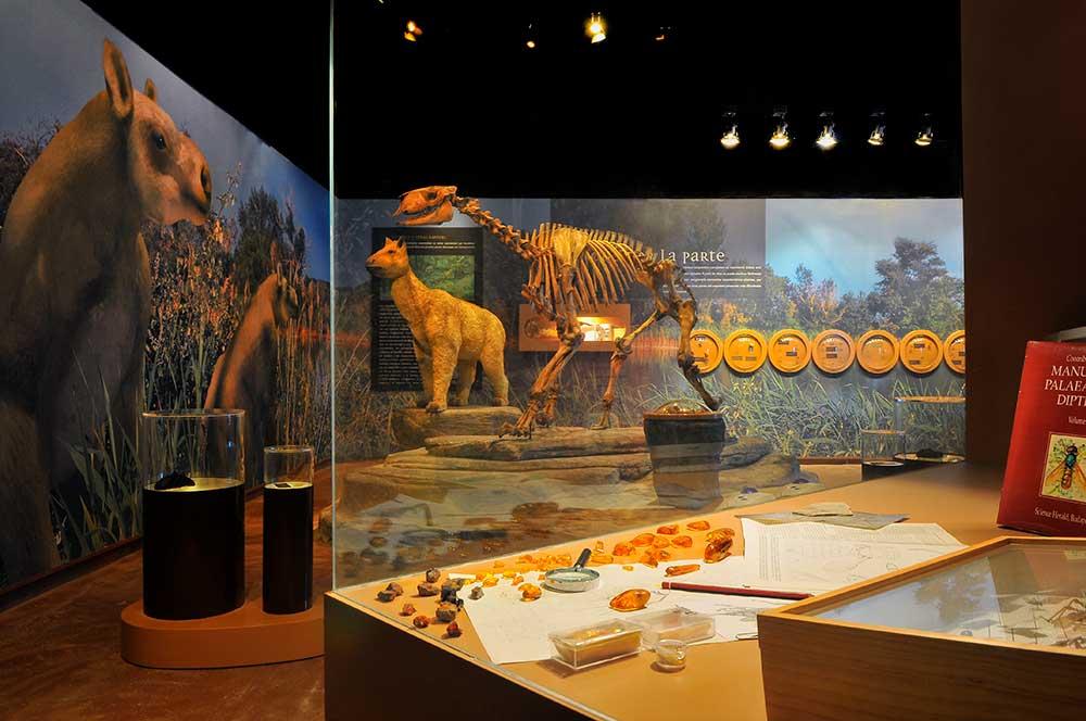 Imagen de la exposición de la región ambarina de Dinópolis.