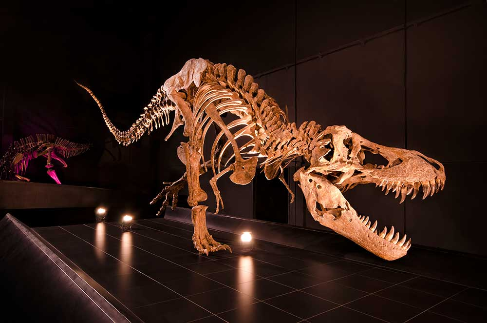 Imagen del Tirannousaurus Rex, en Dinópolis Teruel.